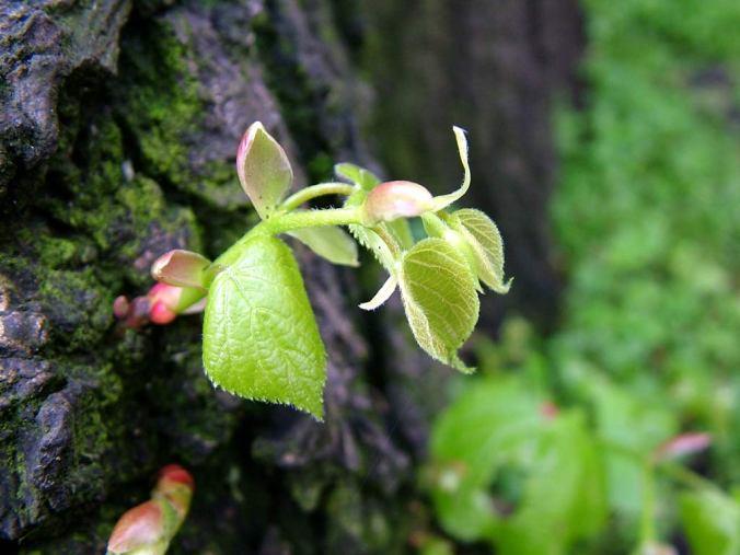 springgrowth